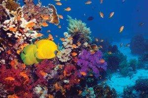 Corals1
