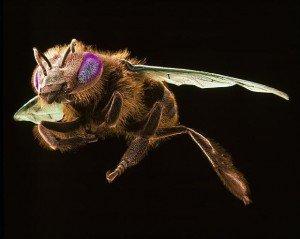 bees_3370425b